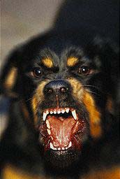 nasty dog