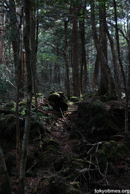 Aokigahara (Sea of Trees)