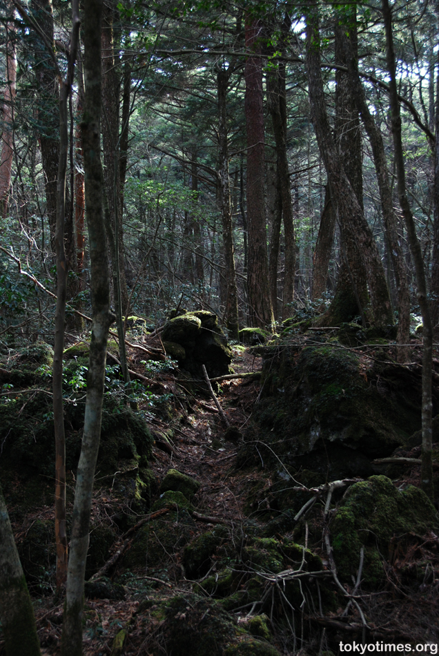 aokigahara forest japan. feelings about the forest,