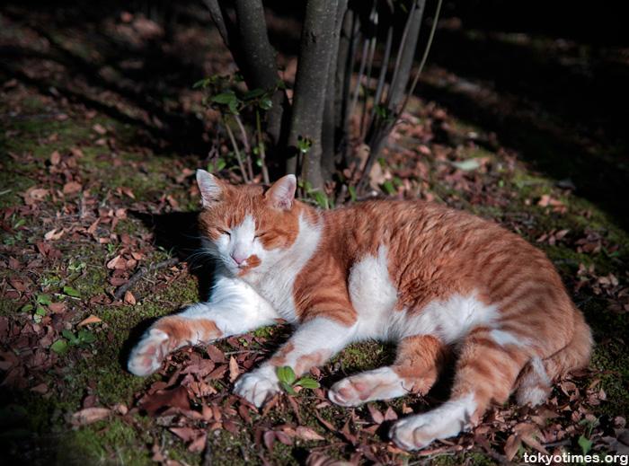 Tokyo cat in Autumn