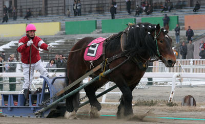 banei japanese horse racing