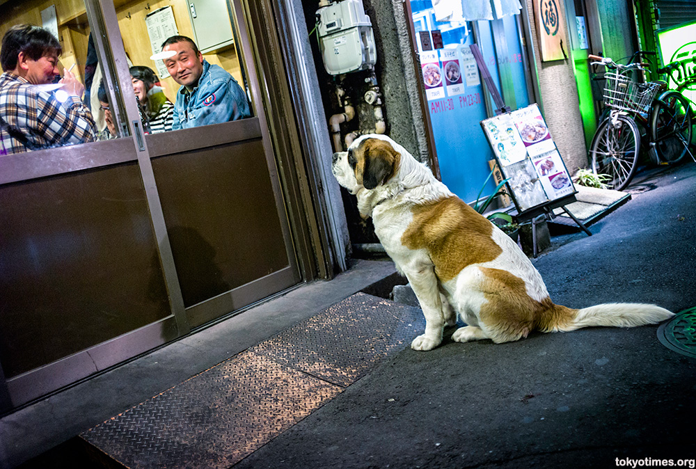 devoted Japanese dog