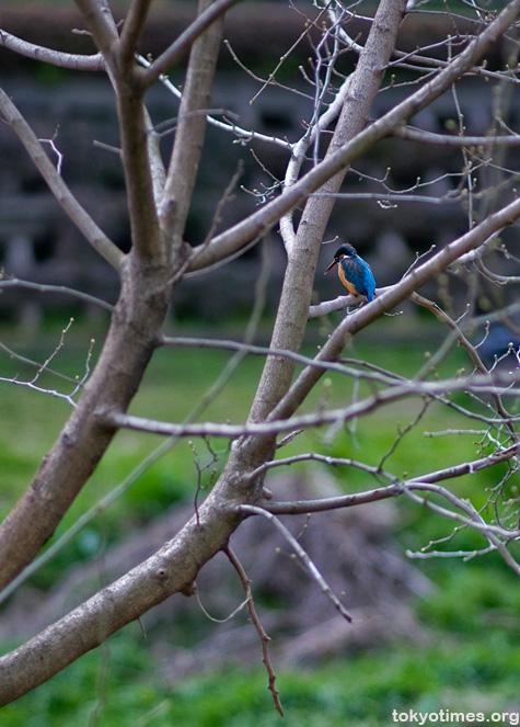 Japanese bird watching