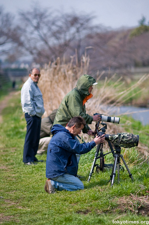 Japanese bird watching