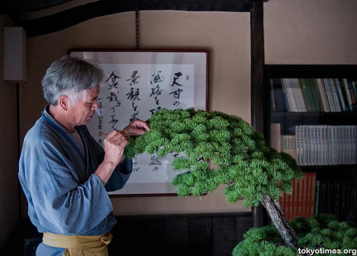Japanese bonsai master