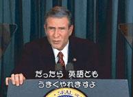 bush01.jpg