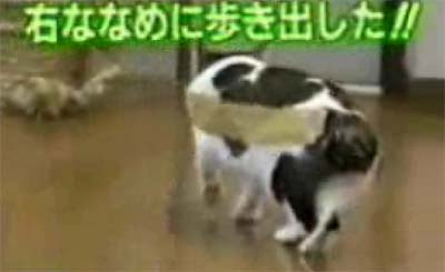 taped up cat japan