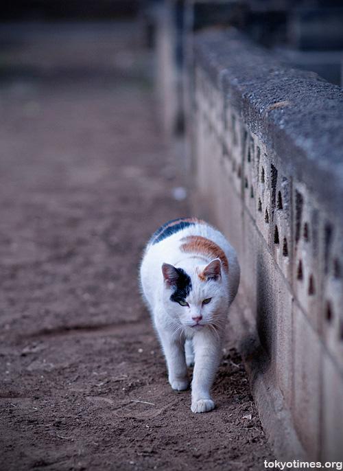 Tokyo cemetery cat