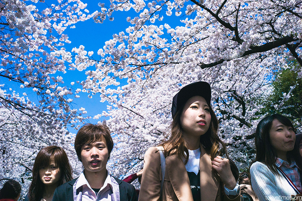 cherry blossom faces