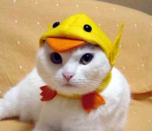 cat dressed as chick