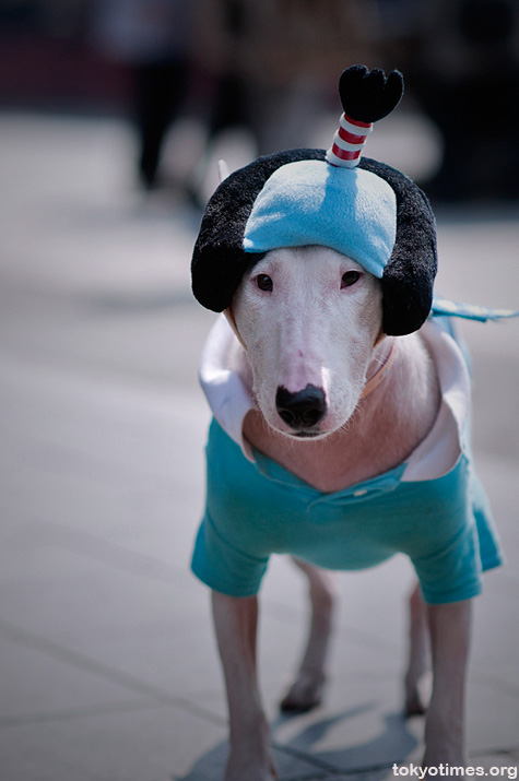 Japanese dog with chonmage wig