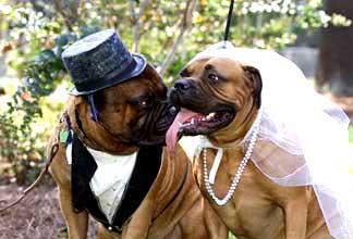 dog.wedding.jpg