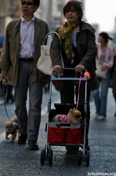 Japanese dog pushchair