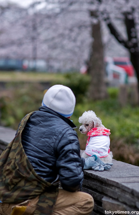 Japanese pet dog