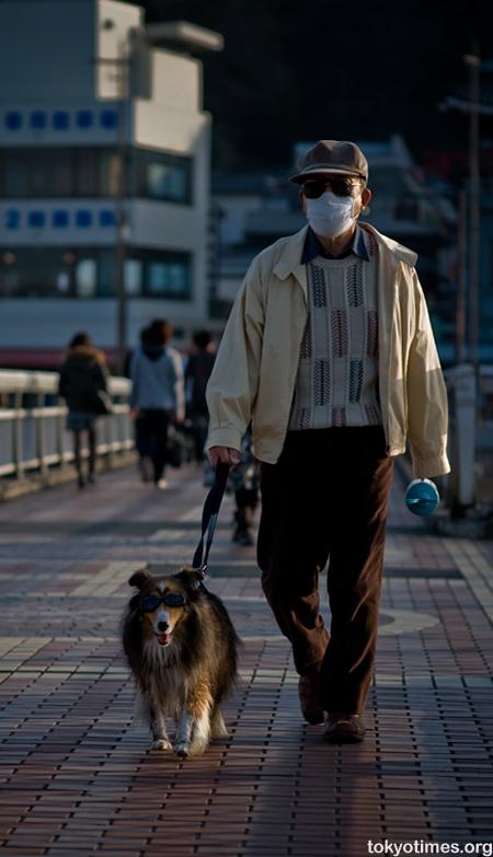 Japanese dog wearing sunglasses