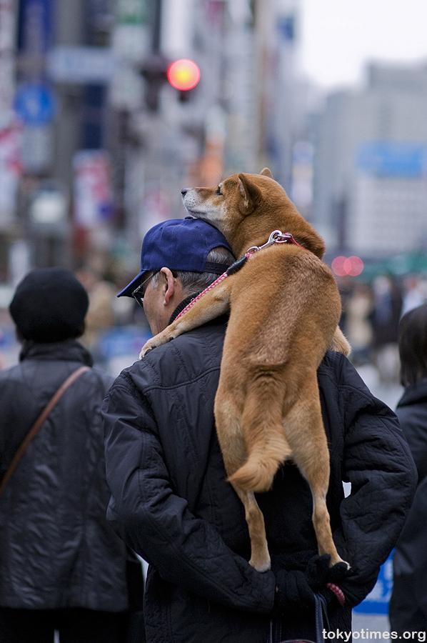 Resultado de imagen para carrying dog