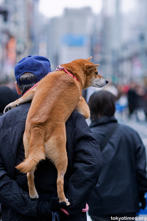 Japanese man carrying a dog