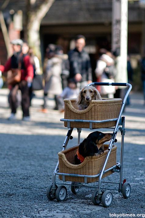 Japanese pet dogs