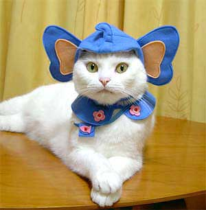 cat dressed as elephant