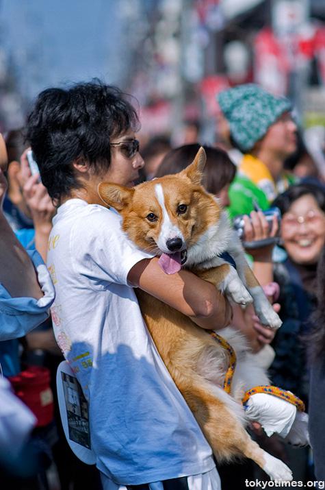 Japanese festival dog