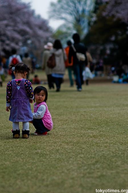 Tokyo cherry blossom