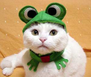 cat dressed as frog