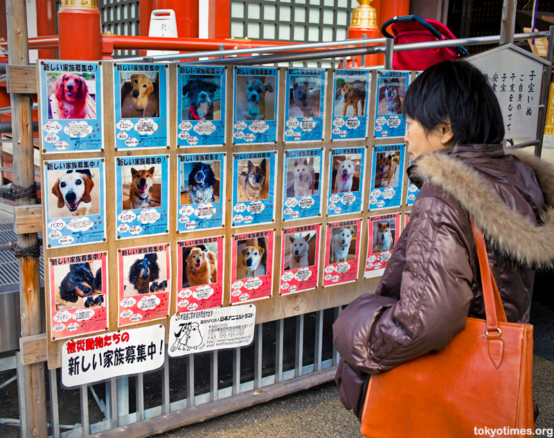 Fukushima dogs