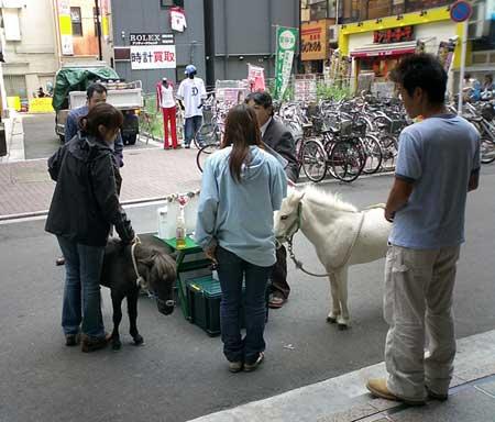 getaway_horse.jpg