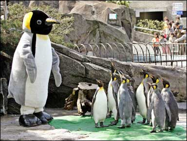 giant penguin japan