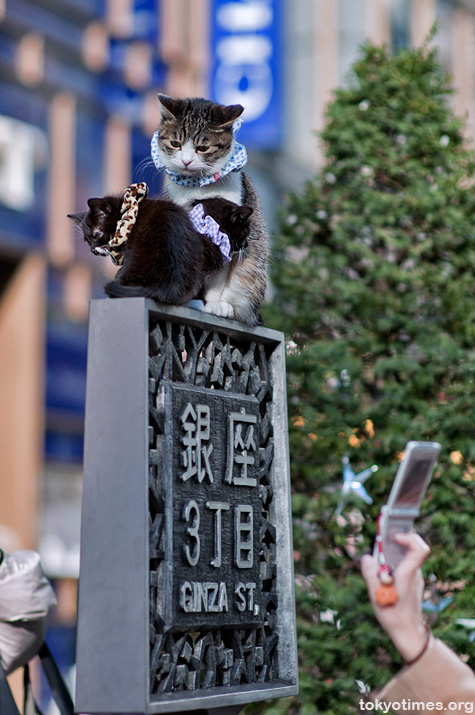 Ginza cats