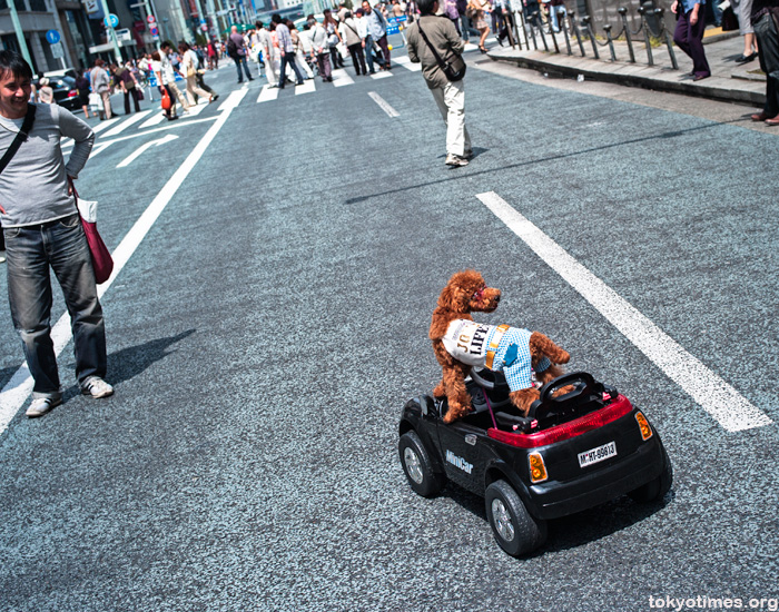 Japanese dog in a remote controlled car
