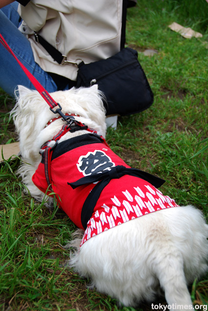 Japanese dog clothes