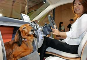honda dog car