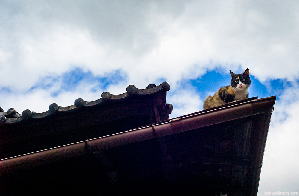 Japanese cat gargoyle