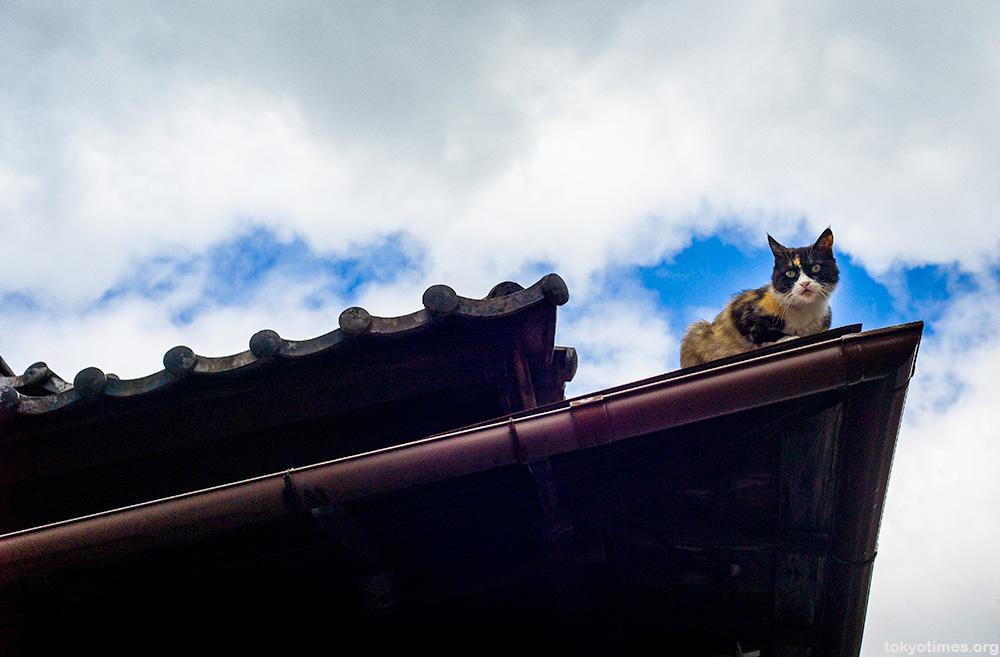 Japanese cat gargoyle