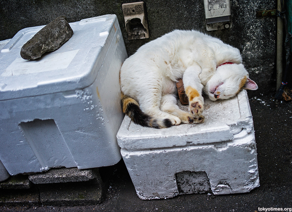 Japanese cat nap