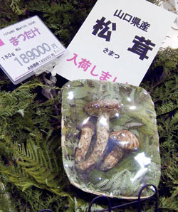 Japanese mushrooms