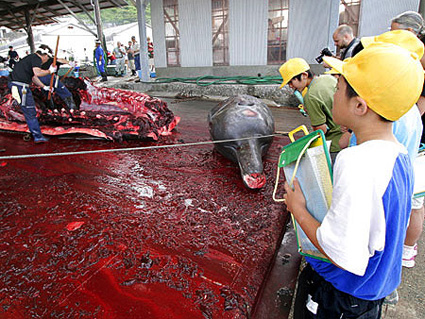should whaling be banned completely Whaling should be banned - whale essay example whaling is the hunting of whales mainly for meat and oil - whaling should be banned introduction.