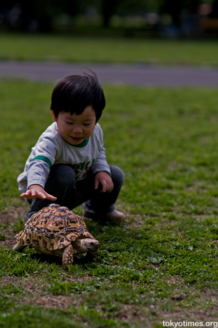 Tortoise in Tokyo