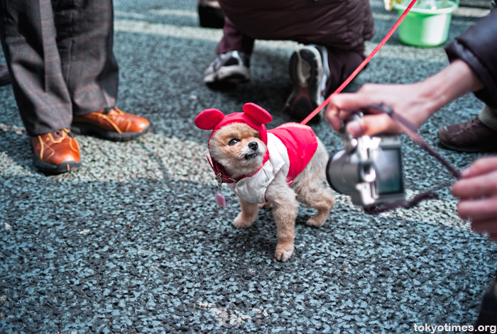 Japanese small cute dog