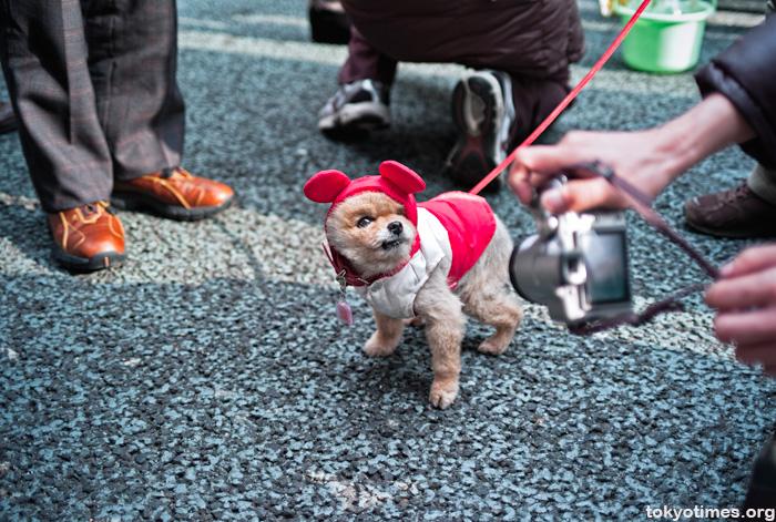 Japanese small cute dog