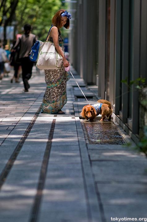 Omotesando in the sun