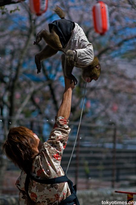 performing monkeys