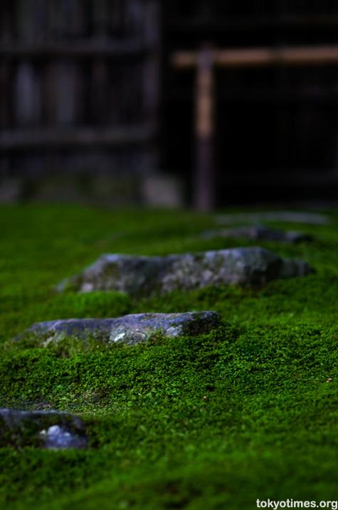 Japanese moss