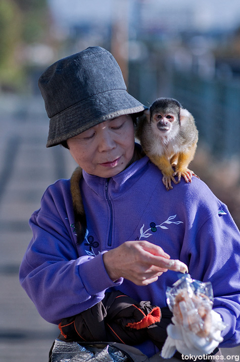 Japanese pet monkey
