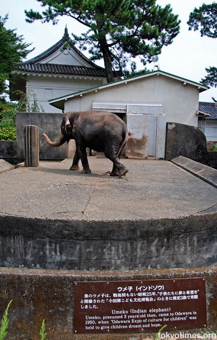 Odawara elephant