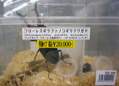 pet beetle