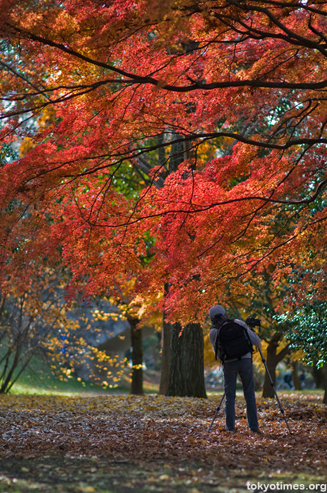 Japanese autumn colours