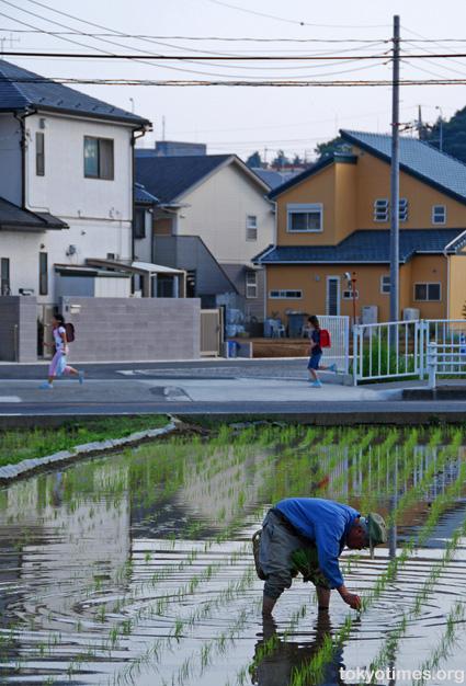 Tokyo rice field