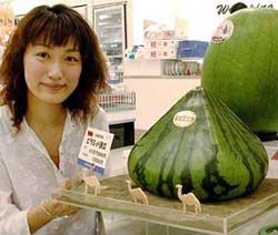 pyramid shaped melon